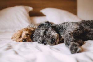 endlich prima schlafen im Gelbett
